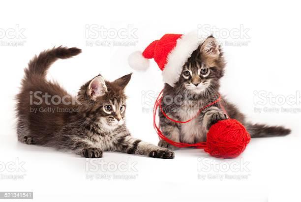 Kitens a santa hat picture id521341541?b=1&k=6&m=521341541&s=612x612&h=4m7xxku0hrnzwt1 ms6z5kf90nxw 2jjqmcgiajagow=