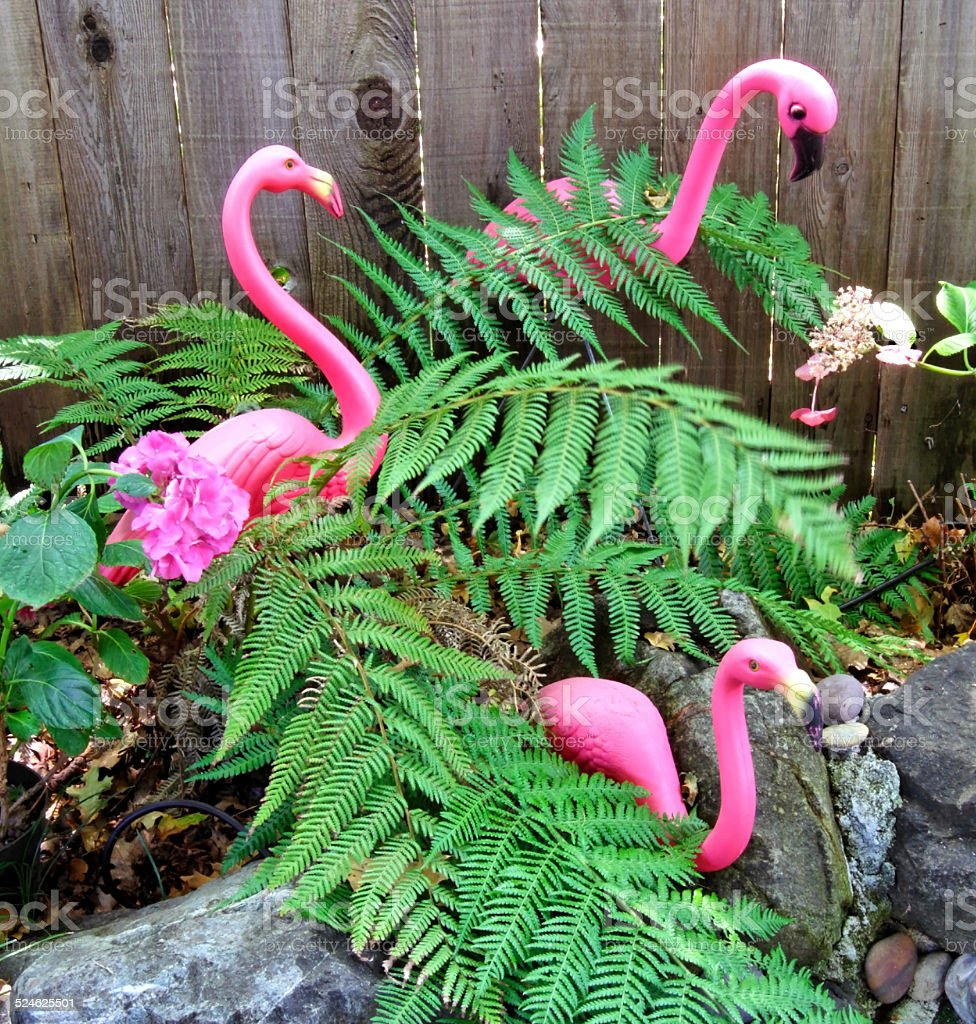 Kitsch Pink Flamingoes Standing Among Ferns stock photo