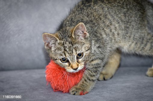 a tiny kitten is playing on the home sofa with orange pompon. Portrait with a small depth of field. Close-up photo.