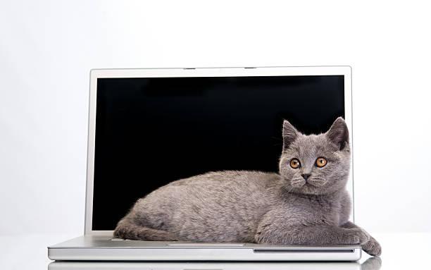 Kitten and a laptop picture id495419269?b=1&k=6&m=495419269&s=612x612&w=0&h=xz2mylfl4zof aummik4q nwxagwjezqdtcbzzx b3c=