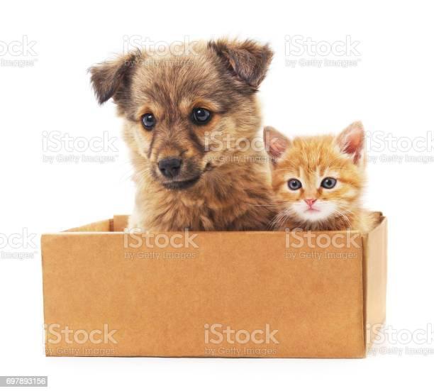 Kitten and a puppi in a box picture id697893156?b=1&k=6&m=697893156&s=612x612&h=r1h5ziy1etxawbfpuxfzcf7yam j7z hxgrjot9 8qm=