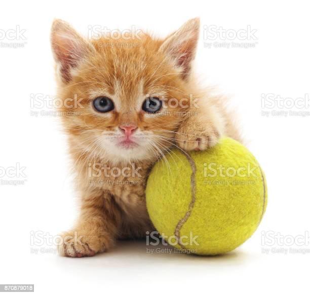 Kitten and ball picture id870879018?b=1&k=6&m=870879018&s=612x612&h=oo3rnqrjp vgepillolc77u mmwo lqtuhok2bvj7dy=
