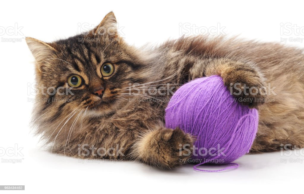 Kitten and ball. stock photo