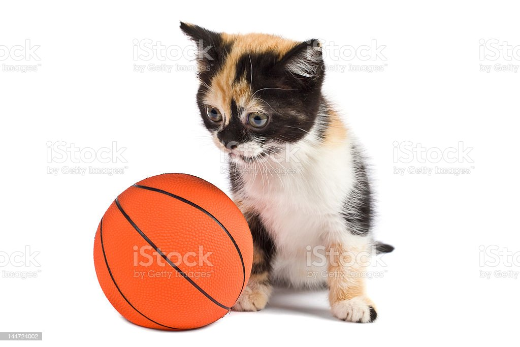 Kitten and basketball stock photo