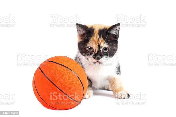 Kitten and basketball picture id146068481?b=1&k=6&m=146068481&s=612x612&h=btio3rnbpcfb4sh 0qaqtaytymrlduxl0xnggdpif5g=