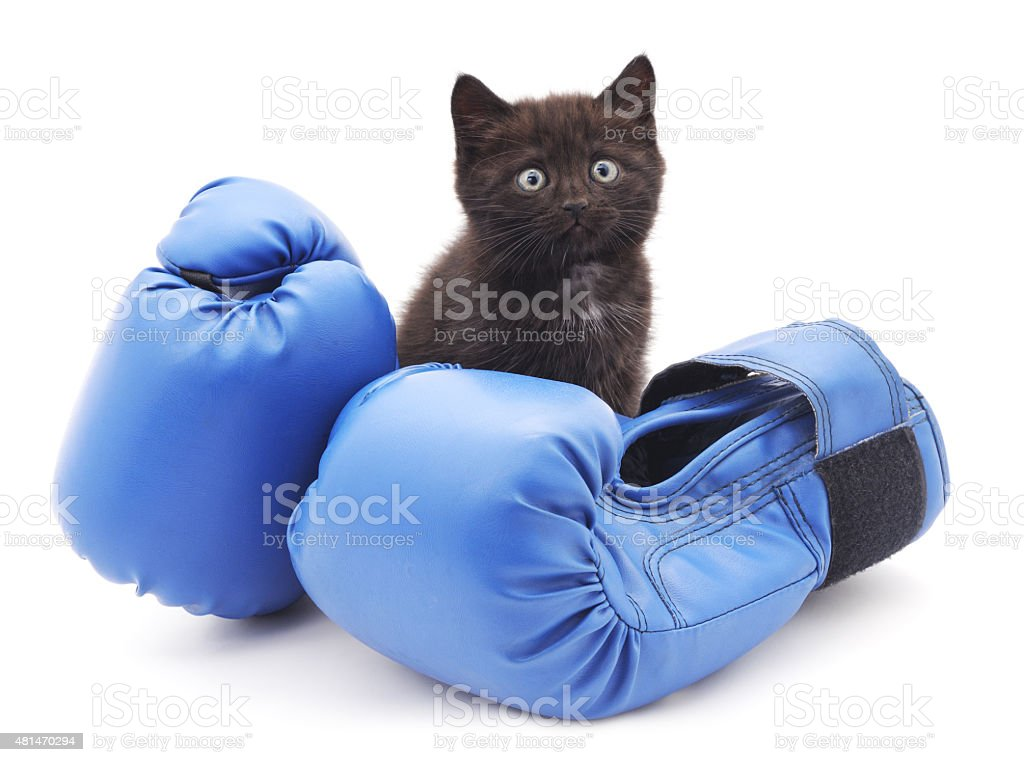 Kitten and boxing. stock photo