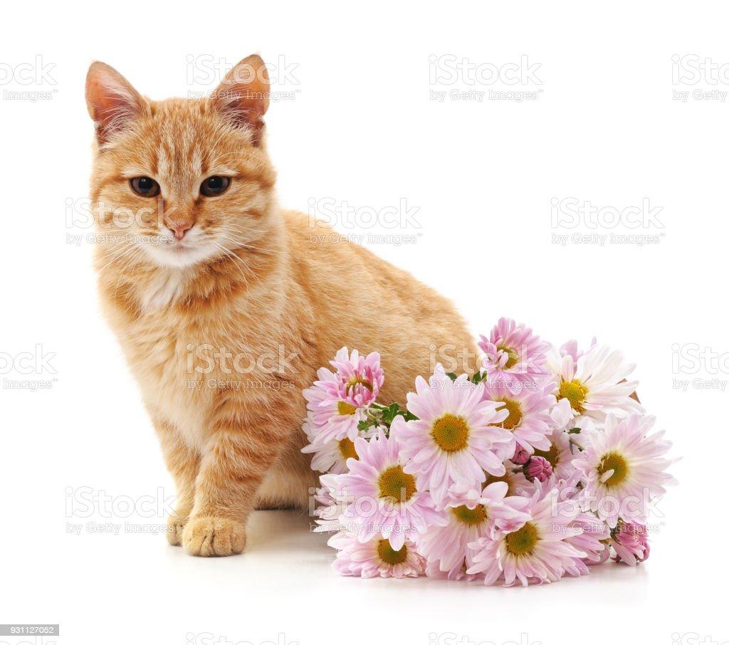 Yavru kedi ve papatya. - Royalty-free Alman Papatyası Stok görsel