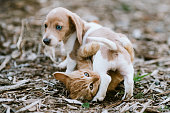 A cute little cat and very young Dachshund play together.