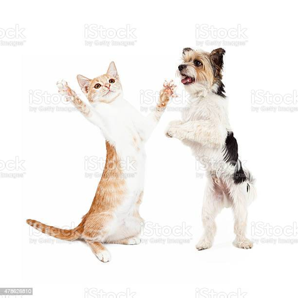Kitten and dog dancing together picture id478626810?b=1&k=6&m=478626810&s=612x612&h= lim 7ohlcygbp2wy1allaxg7g4ylqdvm6mt3f22spq=