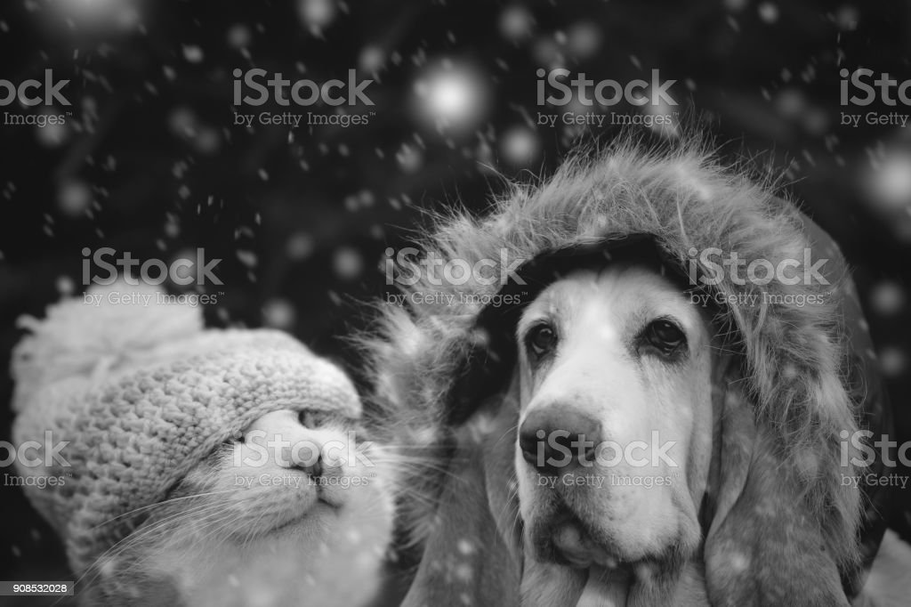 Kitten and dog in winter cap stock photo