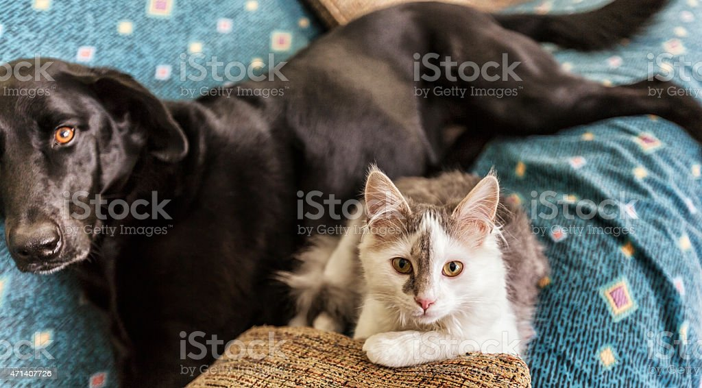Kitten and Dog Lying on Couch stock photo