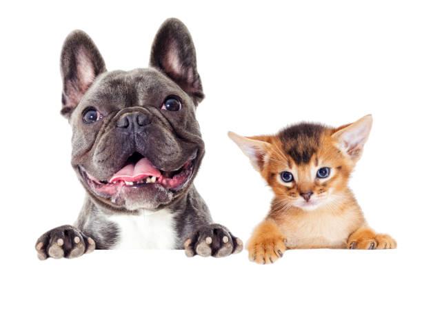 Katze und Hund peep – Foto
