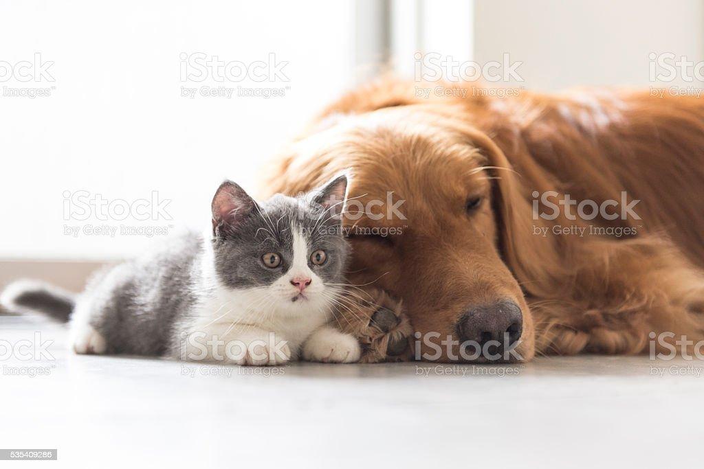 Filhote de gato e cachorro juntos snuggle - foto de acervo