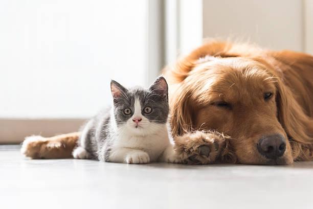 Perros mascota y descanse junto - foto de stock