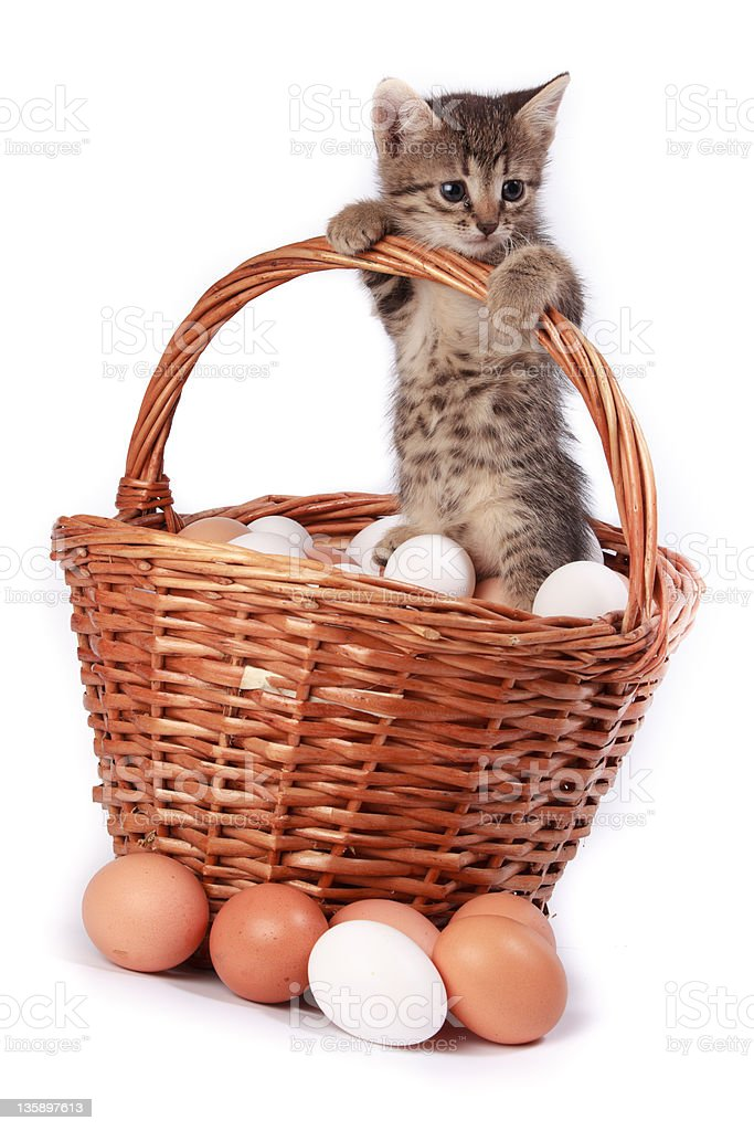 Kitten and eggs royalty-free stock photo