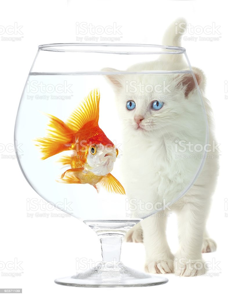 kitten and fish royalty-free stock photo