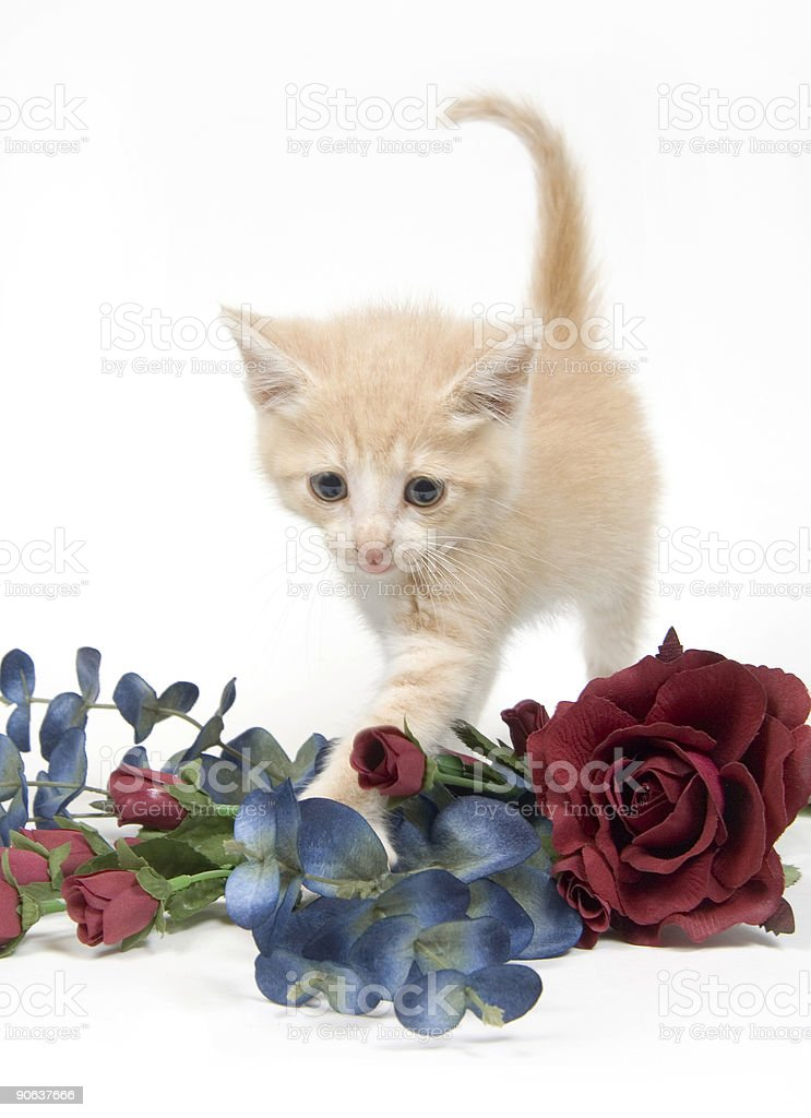 Kitten and flowers on white background royalty-free stock photo