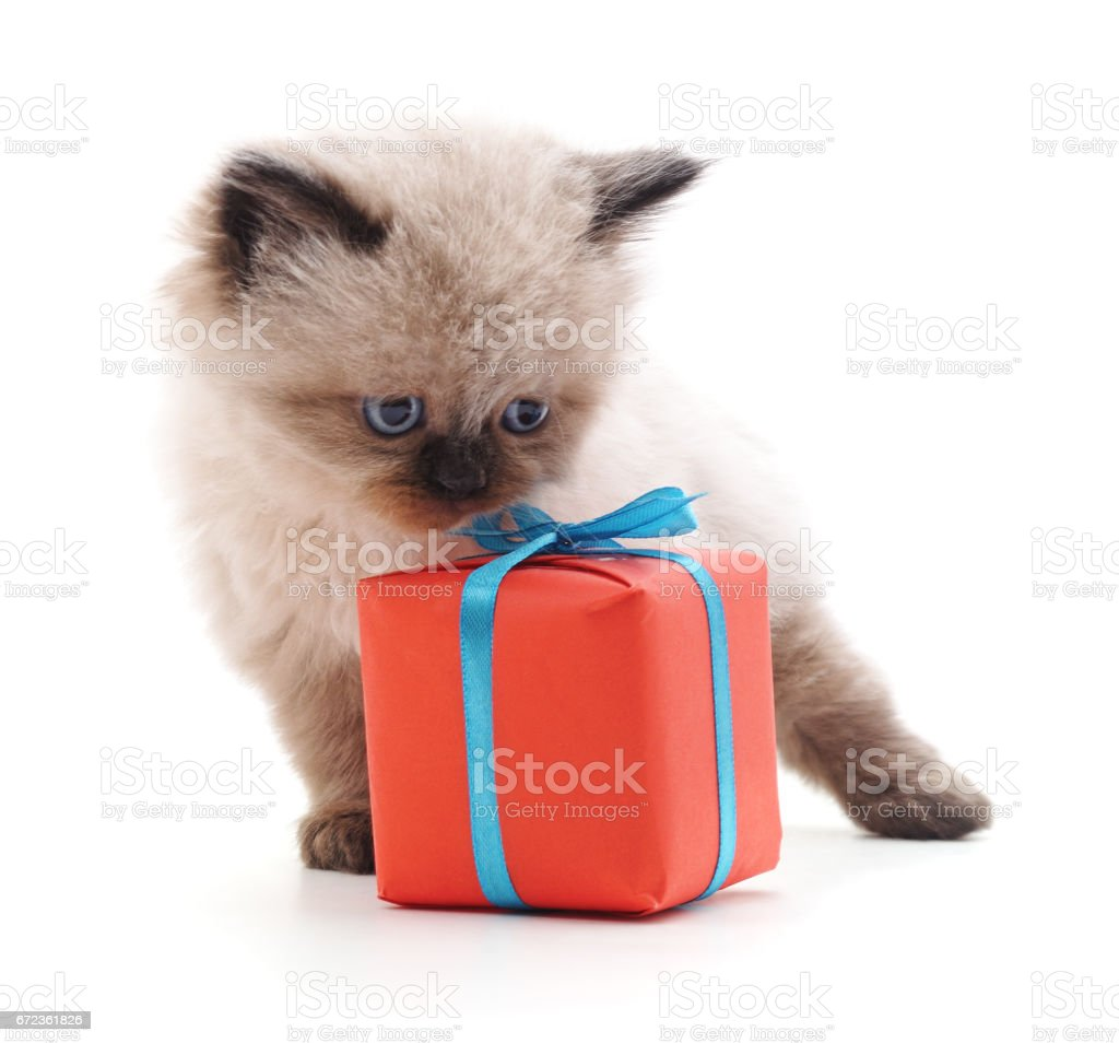 Image result for Happy birthday cats red