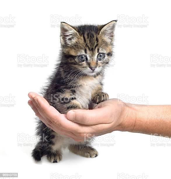 Kitten and hand picture id95940703?b=1&k=6&m=95940703&s=612x612&h=j480sjqa5mhe9diywdhwe7nvuiobwfgnvtce9pvt7 8=