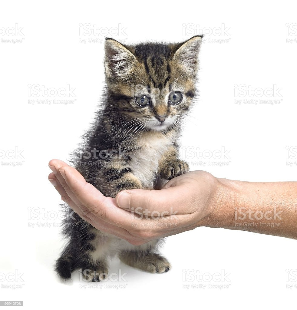 kitten and hand stock photo