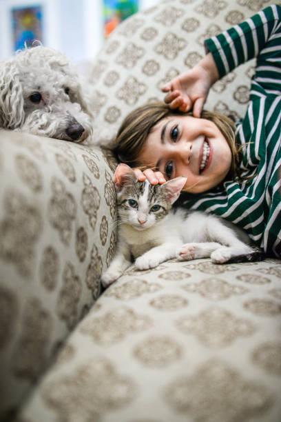 kitten and kid - bambino cane foto e immagini stock
