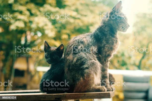 Kitten and mother picture id988392024?b=1&k=6&m=988392024&s=612x612&h=eiijxvzmsh qk0pchns0dsxgnvifstoddysnzw2emdm=