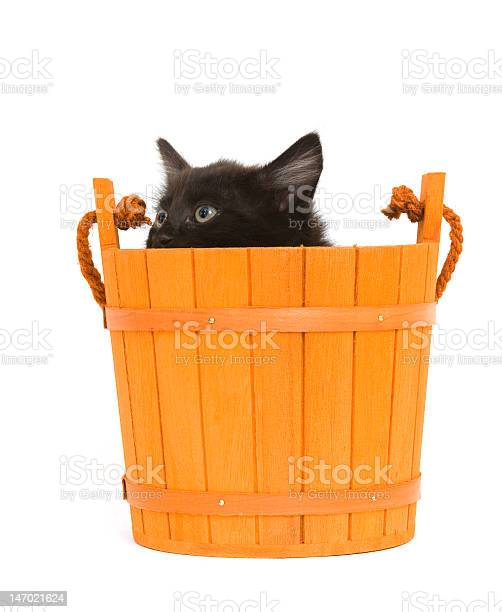 Kitten and orange barrel picture id147021624?b=1&k=6&m=147021624&s=612x612&h=kmu0sg0mcpwqqseyoivxz5bh9z7dxlzd3ko1lfc8mkw=