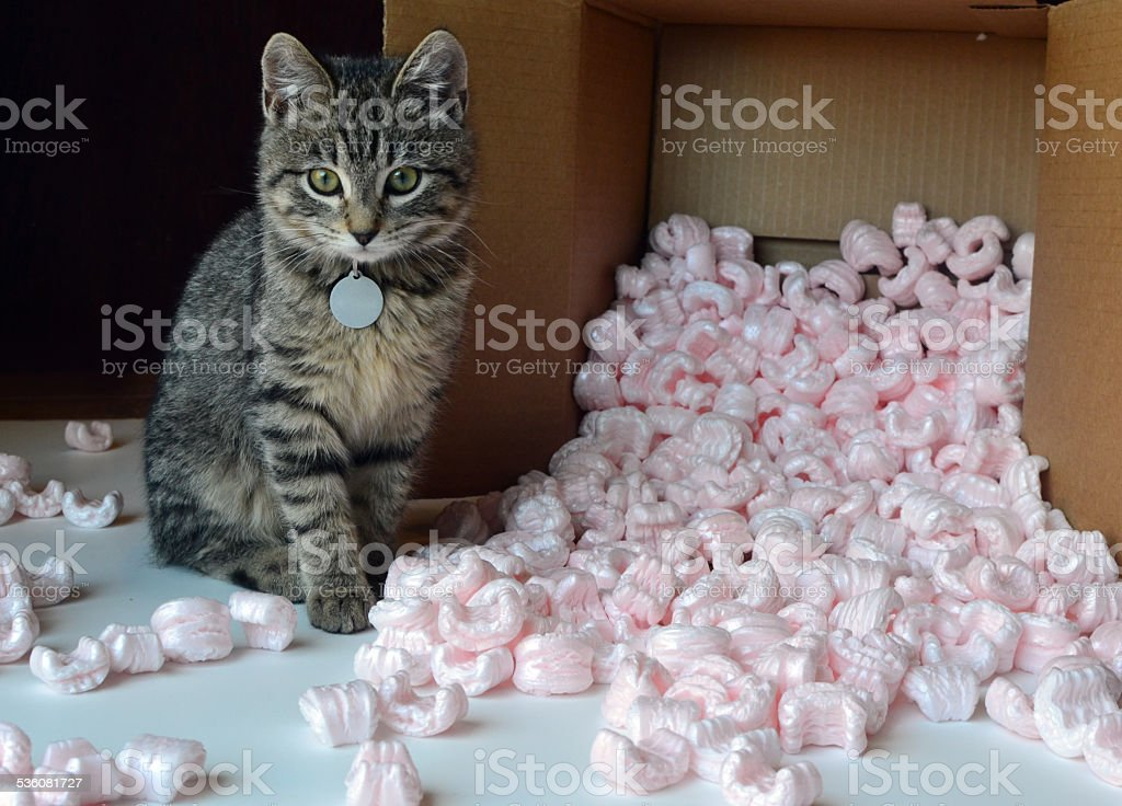 Kitten and packing peanuts stock photo