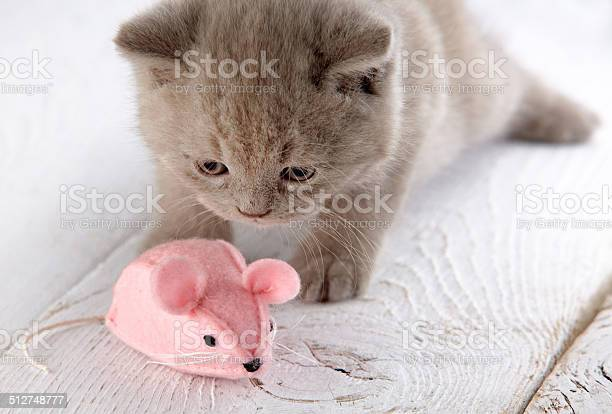 Kitten and pink mouse picture id512748777?b=1&k=6&m=512748777&s=612x612&h=2gswfgt7o dqwefentem4ab6iw6lg63a2za5ei3cyyi=
