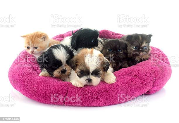 Kitten and puppies picture id479851446?b=1&k=6&m=479851446&s=612x612&h=crw2dv45qb7juqszowvlbihqkow9cls kedk8asdhpk=