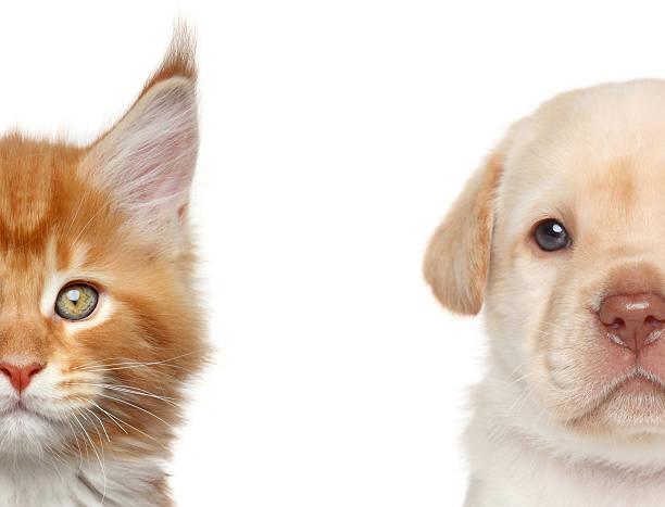 Kitten and puppy half of muzzle portrait picture id502020853?b=1&k=6&m=502020853&s=612x612&w=0&h=whuz9jv5jssgk46oayxrv5de9spunlhm3wjoeevetea=