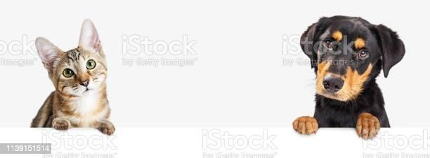 Kitten and puppy hanging over white web banner picture id1139151514?b=1&k=6&m=1139151514&s=612x612&h=w5j9l0sr461havjrvo3yikzukyucbhnrcaqu4wim3so=