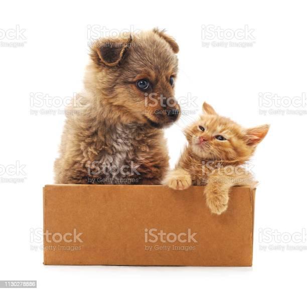 Kitten and puppy in a box picture id1130278886?b=1&k=6&m=1130278886&s=612x612&h=rlzxygz3wtmwiobeiurhvanfobcu3lh3ghn ovn53xo=