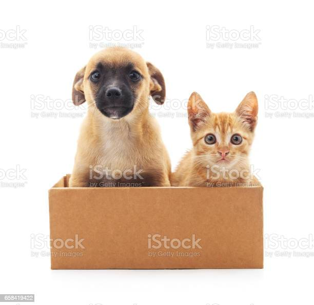 Kitten and puppy in a box picture id658419422?b=1&k=6&m=658419422&s=612x612&h=djovcqu6oy1c8vtm4hlhiygxn0df7 qywpcko9cfops=