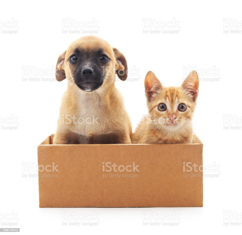 Kitten and puppy in a box. - Photo
