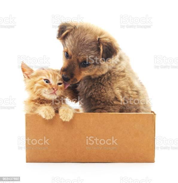 Kitten and puppy in a box picture id953437892?b=1&k=6&m=953437892&s=612x612&h=8mmoilrgv03y2vzomils7bmjd0xeqcyfqbqnnn6gyrc=