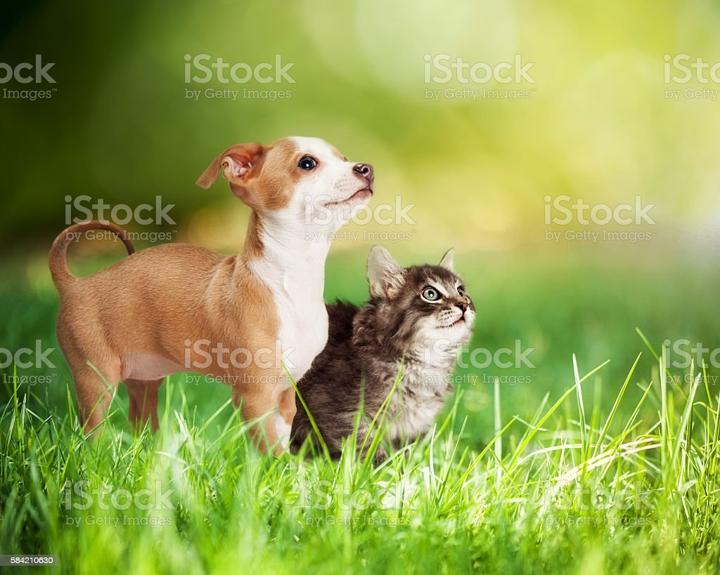 Kitten and Puppy in Long Green Grass - foto de acervo