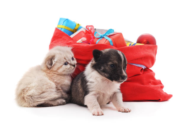 Kitten and puppy is near the christmas bag with gifts picture id889209308?b=1&k=6&m=889209308&s=612x612&w=0&h=9ekj7yg9b9p0kyrjlt awkgcsoeahtdm6h0bjrko2pw=