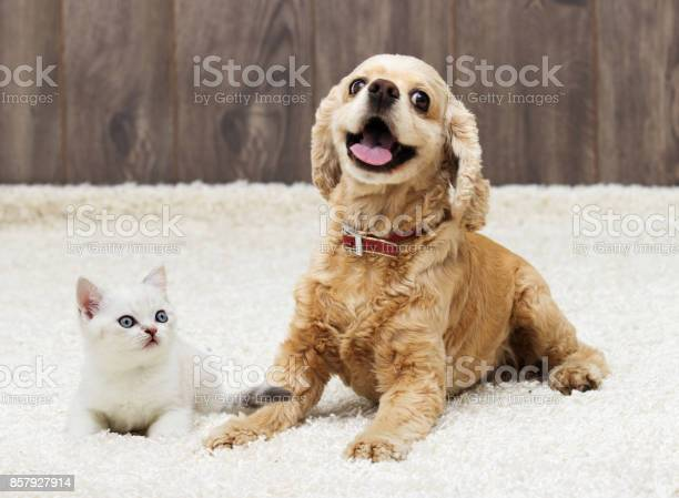 Kitten and puppy looking in the apartment picture id857927914?b=1&k=6&m=857927914&s=612x612&h=jyidjbhn3kmyc2zn6cfx4c chzvqktohgqti5dm1ijq=
