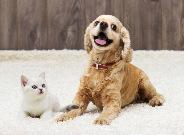 Kitten and puppy looking in the apartment picture id857927914?b=1&k=6&m=857927914&s=612x612&w=0&h=uycaqr4ew4gdnswkbfnci tfhcvwq5u8vwg4qepso5c=
