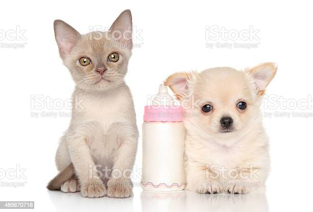 Kitten and puppy near baby bottle picture id485670716?b=1&k=6&m=485670716&s=612x612&h=1f adytx7ce8kaym2bs wcb2gyrlc4ue5qrs90jw8g0=