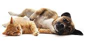 istock Kitten and puppy. 1031552206