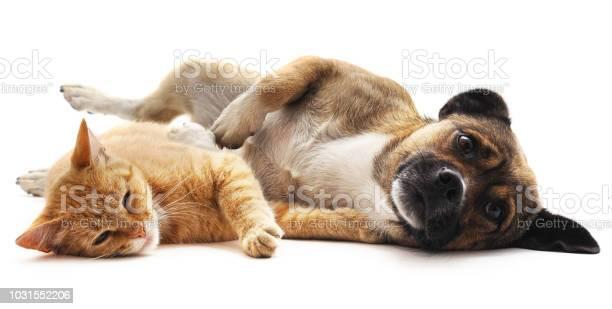 Kitten and puppy picture id1031552206?b=1&k=6&m=1031552206&s=612x612&h=84b2gzpego1c4uupgyivkgqnmt5q7g2xj lxmizthjm=