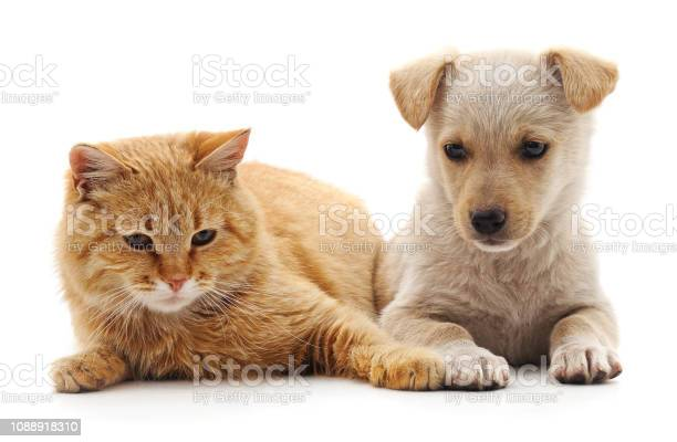 Kitten and puppy picture id1088918310?b=1&k=6&m=1088918310&s=612x612&h=wsh7yowcudo4kld1z utjxqd0nghxhdtsjs6 2kol0e=