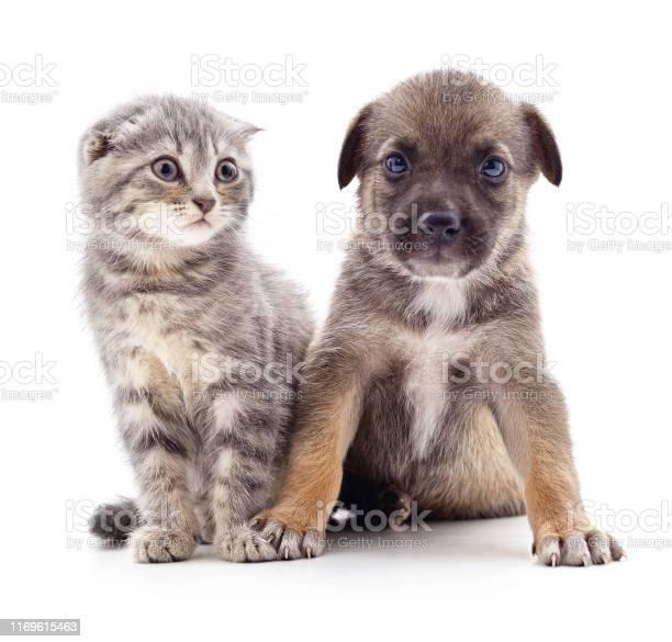 Kitten and puppy picture id1169615463?b=1&k=6&m=1169615463&s=612x612&h=q buv0pu1zvutlliancufmtkl2diekmkqhrx44ojmbq=