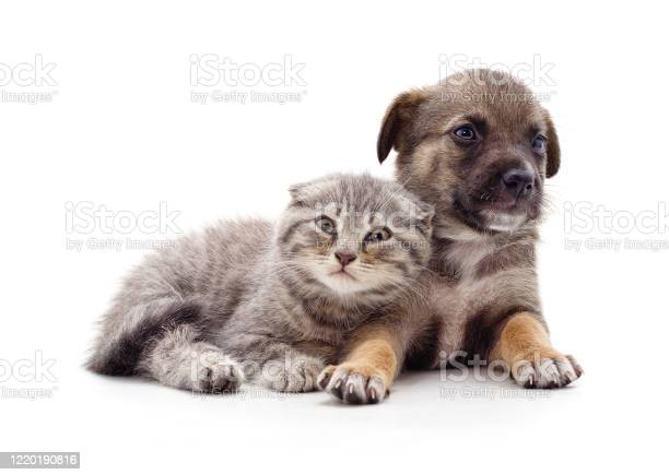 Kitten and puppy picture id1220190816?b=1&k=6&m=1220190816&s=612x612&h=c2pdxbabiwpstwfrakvbdvqklolk1ngxm7lg97g2d y=
