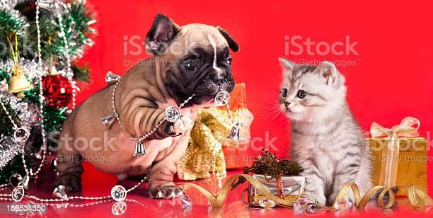 Kitten and puppy picture id186534350?b=1&k=6&m=186534350&s=612x612&h=a4emt8aeemnsm avbt0eunrmxcn3dh8o1pykjj996e0=