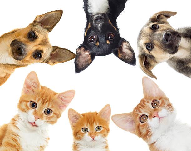 Kitten and puppy picture id504877578?b=1&k=6&m=504877578&s=612x612&w=0&h=dfhe5 qrlym7o84syigs0mpcwdkoaukfiyvbvamf nw=