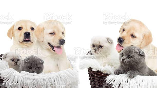 Kitten and puppy picture id518436026?b=1&k=6&m=518436026&s=612x612&h=oidts dyqvuagz8hwopjeqobhmnjty6u27bfiuiac4w=