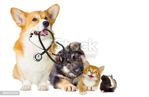 istock kitten and puppy 639503932
